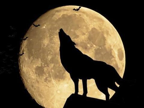 狼性:真正能成大器的男人,往往有三种强者思维,注定是人上人