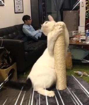 猫女郎表演热辣钢管舞,后排男子却淡定无视,猫:眼光高了?