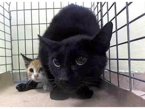 母猫排斥人类,小猫被收养却无人收养它,女孩用1年时间得到了它