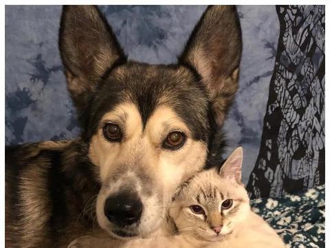 残疾小猫被妈妈抛弃,狗狗照顾了小猫,如今小猫亲吻狗狗以表感谢