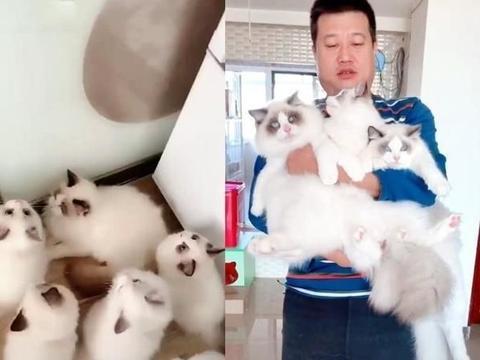男人家里养了18只布偶猫,满地白色海洋,网友羡慕:行走的人民币