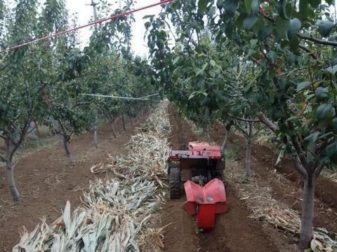 农村果园深翻改土的两个最佳时机,农民朋友可以准备准备