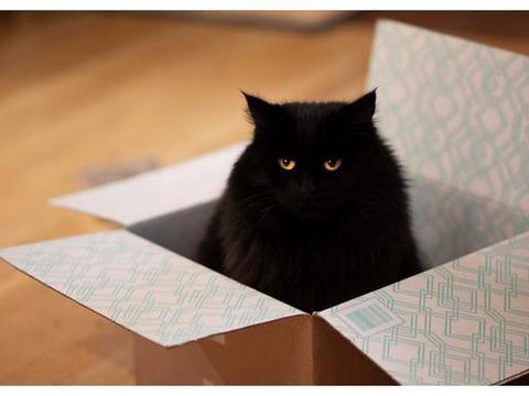 猫咪爱睡在狭小地方的5种心理,又窄有挤使它安心,胖猫也喜欢