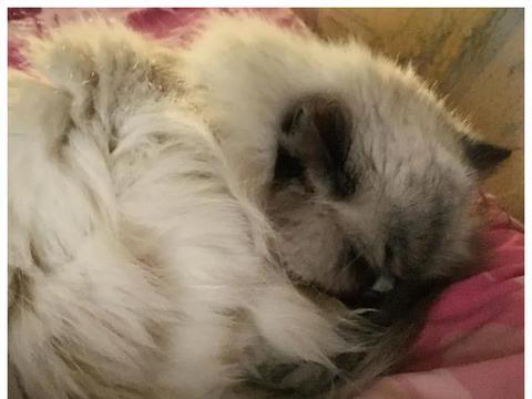 14岁老猫被主人送走,为了让自己安度晚年,它主动向人示好