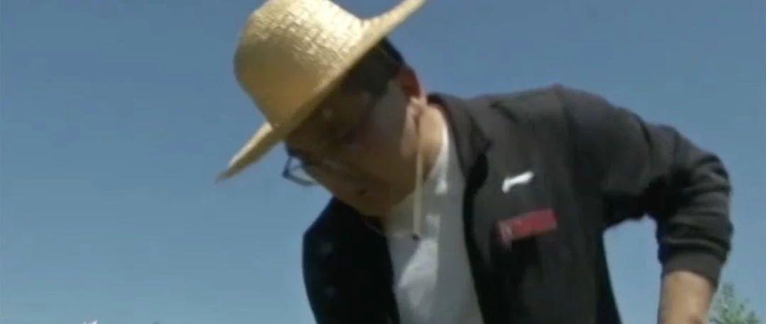"""五年前,他几乎没到过农村,现在成了村里的""""玉米书记"""""""