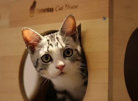 猫频繁呕吐什么情况?