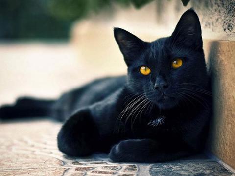 猫咪虽有第六感,但与人类第六感不同,是因感知器官很强大