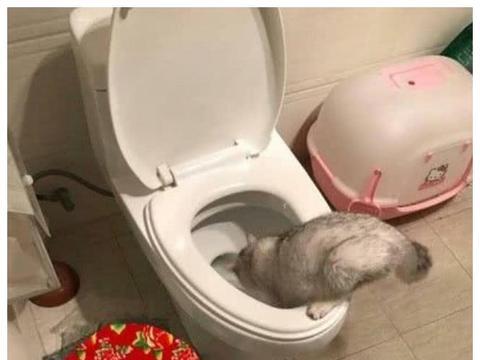 猫咪爱钻进卫生间玩耍,主人疑惑跟了进去,被眼前画面气坏了