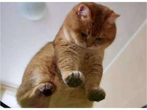 女孩偷偷把猫咪带去上课,突然感觉不对劲,回头一看女孩不淡定了