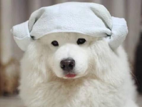 """最""""粘人""""的5种狗狗,阿拉斯加上榜,最后一个上厕所都跟着!"""