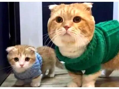 铲屎官给猫咪母子买衣服,猫妈穿上后很满意,喵:这亲子装不错