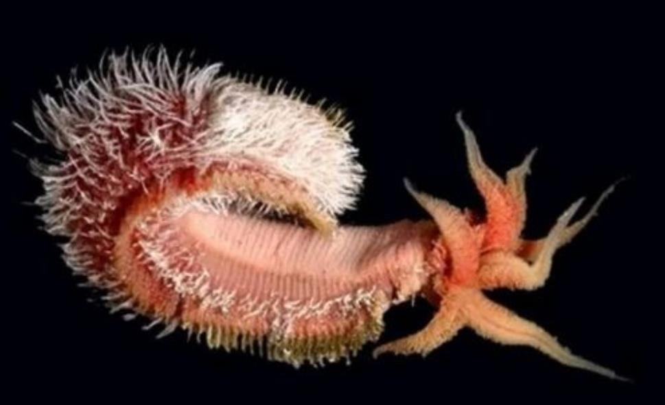 永久冻土中沉睡42000年的生物被唤醒,科学家复活出了怪物