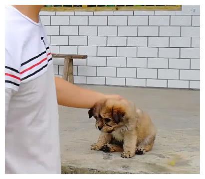 街头一只走失的流浪小狗狗,找到狗妈妈时,它开心的表情可爱极了