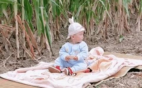 """""""全能宝妈""""带娃""""收玉米""""两不误火了,所谓坚强,全靠硬扛!"""