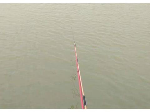 水库莫名出现观赏鱼,不仅破坏生态环境,还坑惨了那些垂钓者!