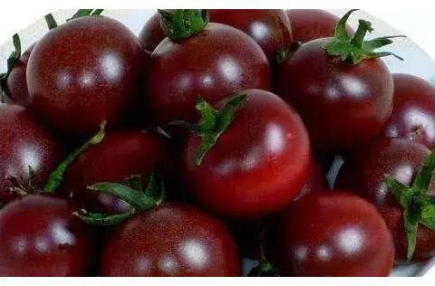 一粒种子成本2元,每亩收益12万,成农民创业致富种植新项目