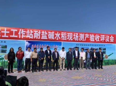 亩产超千斤!袁隆平团队在内蒙古大面积试种耐盐碱水稻
