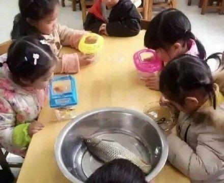 那个给孩子带错鱼的爸爸,爸爸带孩子,一个解不开的谜