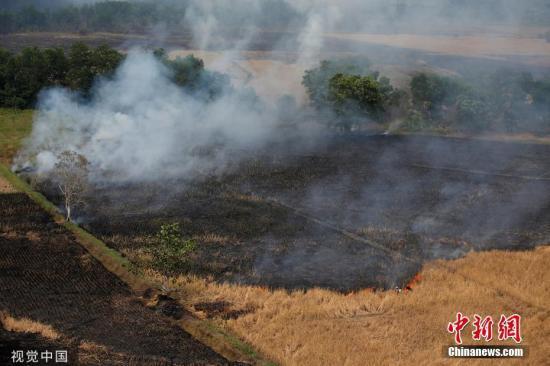 当地时间2019年9月29日,印度尼西亚加里曼丹省中部Banjarmasin附近,森林火灾后一片焦土。 图片来源:视觉中国