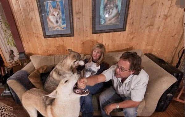 夫妻俩带爱犬爬山不幸走失,几个月后狗狗带回4个狼崽,现长大了