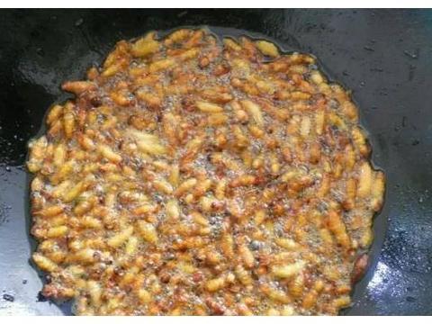 胡蜂怎么做好吃,哪种胡蜂最好吃,农村人才知道