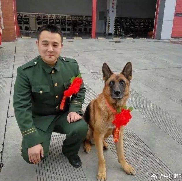 功勛消防搜救犬去世 難忘它在汶川地震救援的傳奇故事