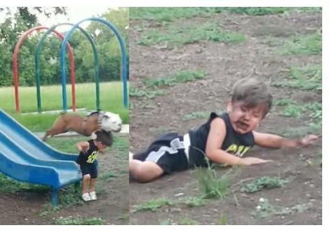 弟弟溜滑梯被后面的狗狗追撞后趴地上吃土,让爸爸当场笑喷