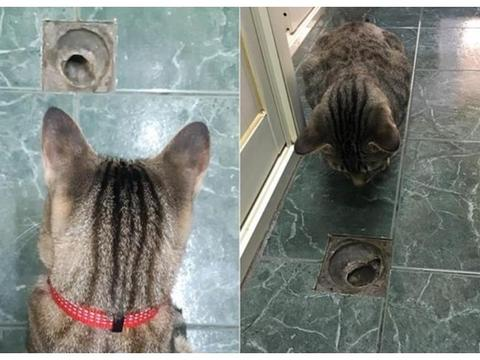虎斑猫每天守排水孔持续2年,妈拍萌萌后脑勺问:到底有什么