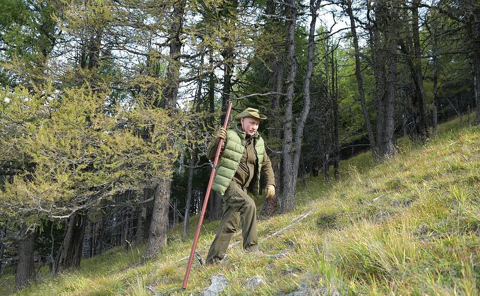 图集|普京迎67岁生日 到西伯利亚原始森林采蘑菇
