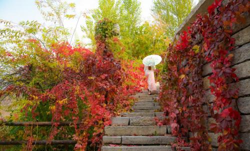 红叶尽染秋意浓古北水镇赏景正当时
