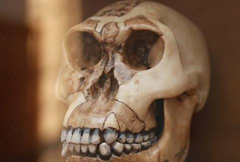 美国科研人员驳斥了有关人类进化的著名假说