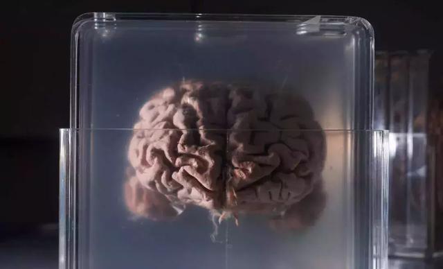 科学家已经掌握两种实现永生的方法,却没有一个人愿意尝试