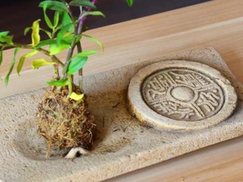 """铁皮石斛玩出""""新花样"""",石头、树根、木板,养起来太好看了!"""