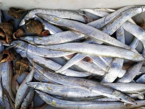 吃了30年冻带鱼,问摊贩有没有活带鱼卖,摊贩:家里有矿吗?