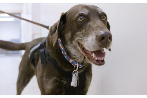 老年犬福音,犬类癌症疫苗进入临床试验阶段,人类用的还会远吗?