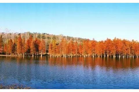 """南京藏着""""小九寨沟"""",遍地红杉成最美秋景,摄影天堂却鲜为人知"""