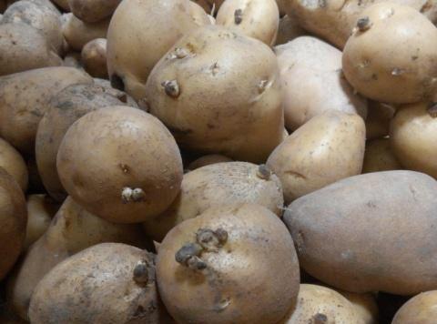 菜贩子教我保存土豆的方法,只需加入一个它,放一年不发青不发芽