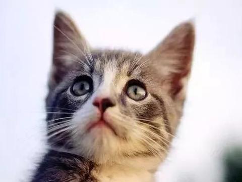 养宠物猫的六大好处,你心动了没?还不快领养一只主子回来