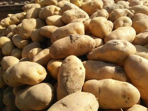 原来土豆这样才不发芽,我也是刚发现,解决了很多人的烦恼