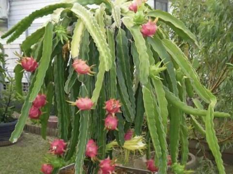 """在家吃2种""""水果"""",留下1勺""""果肉"""",浸泡2小时,播种后变果树"""