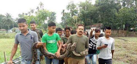 印度男子玩弄9.1米长的巨蟒,险些被蟒蛇缠死