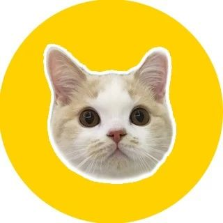 95后女孩立遗嘱财产留给猫,我想为她的思想点赞!