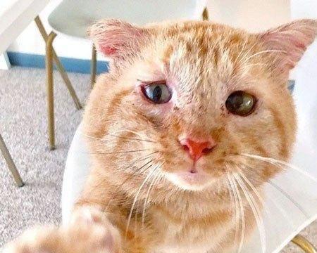 艾滋流浪猫满脸沧桑,终于有人肯领养