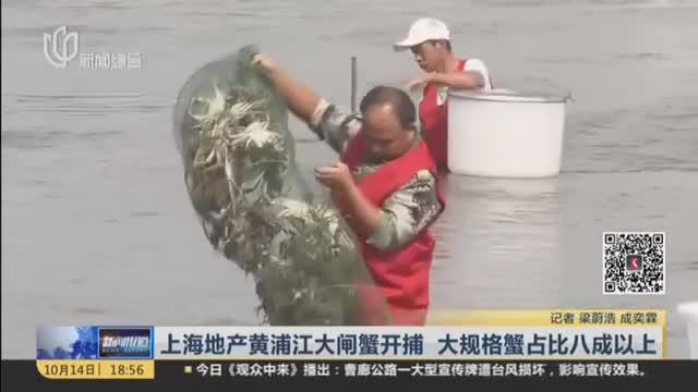 上海地产黄浦江大闸蟹开捕  大规格蟹占比八成以上