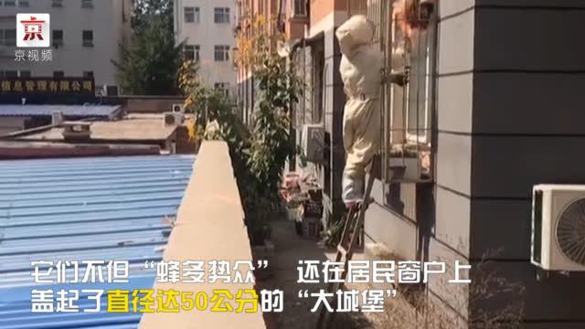 """延庆川北小区惊现直径半米马蜂窝 消防员上演""""人蜂大战"""""""