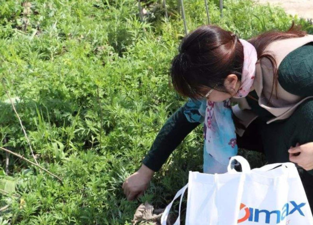 湖南5元一斤的野菜,在河滩上长得又多又鲜嫩,谁摘谁占便宜