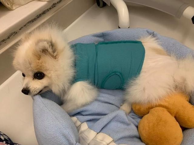 12岁爱犬全身长满硬块!TVB人气小生情绪低落:手术也无法全清除