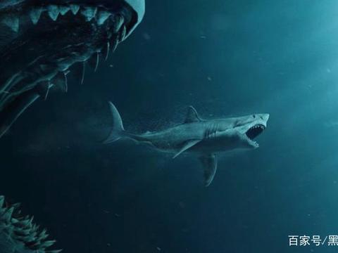 在海里放血真的会引来鲨鱼吗?有人大胆尝试,结果就悲剧了