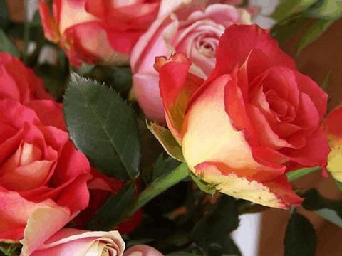 """""""精品玫瑰""""彩纸口红,花开如唇彩,灵动美艳,可以说养花必备"""