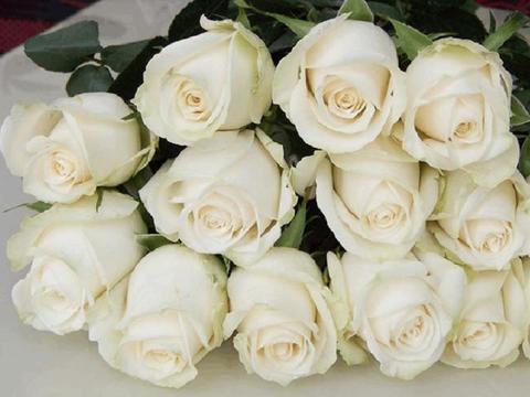 """喜欢菊花,就养盆""""珍品玫瑰""""芬德拉,花开洁白无瑕,清洁高雅"""